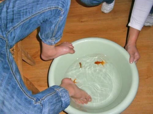 2013. Aquafish therapy